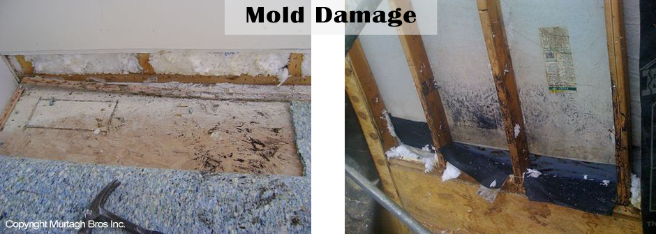 Mold damaged caused by leaking water
